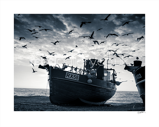 Photograph of Seagulls surrounding fishing boat on Hastings Stade. Photo of Hastings by Jon Wilhelm.